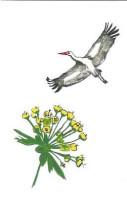 Storch und Dold