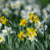 Frühling in Umkirch
